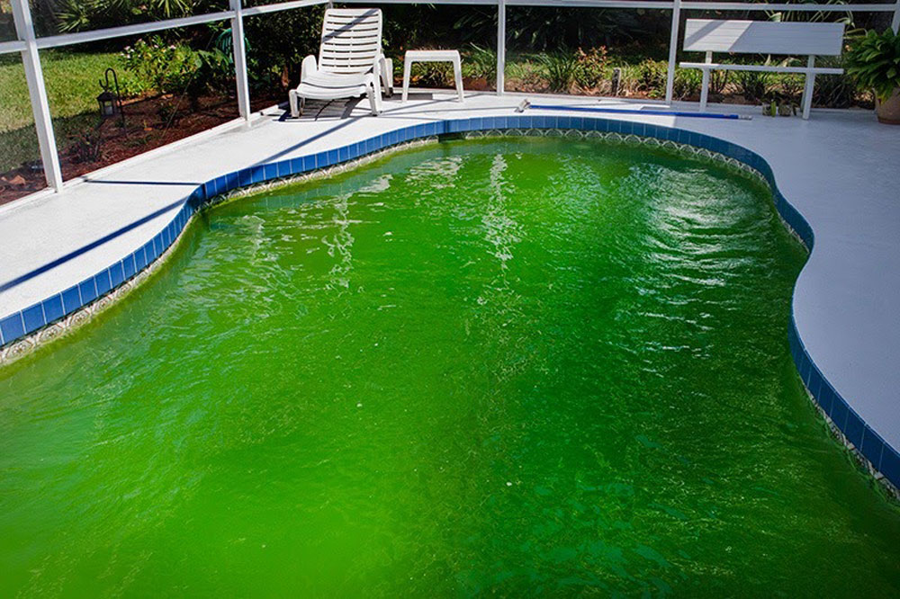 Reasons Why You Should Vacuum Your Pool
